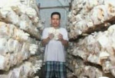 Salah Seorang Memproduksi Jamur Tiram