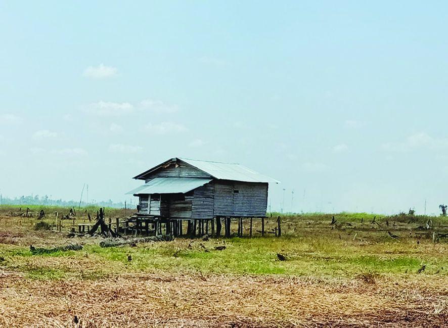 Lokasi lahan Tahura yang digarap oknum tak bertangungjawab.