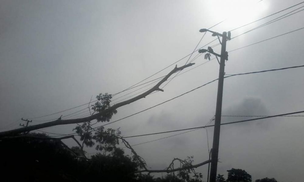 Pohon yang roboh menimpa kabel listrik.