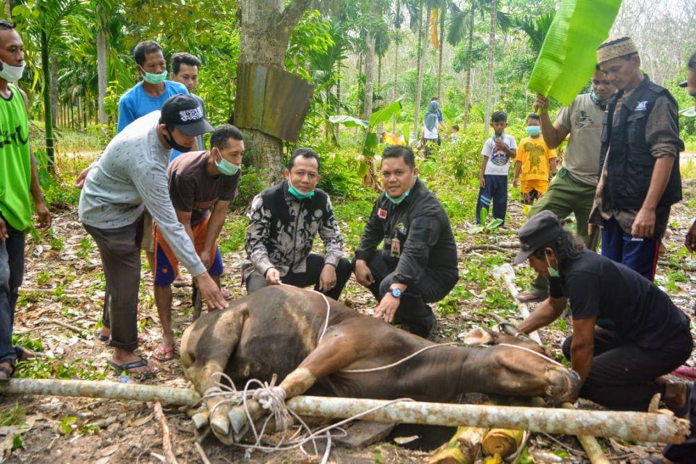 Wabup  Bambang Bayu Suseno menyaksikan penyembelihan hewan Kurban
