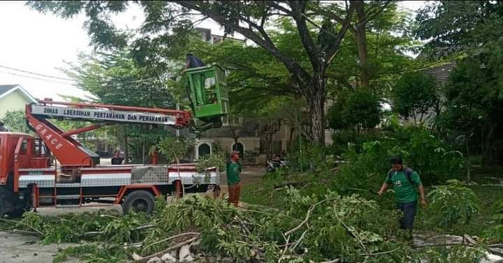 Petugas DLH kota Jambi saat memangkas pohon rawan tumbang