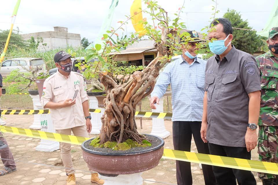 Wabup melihat salah satu bonsai yang dipamerkan